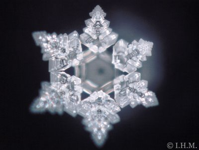 the miracle of water by masaru emoto pdf